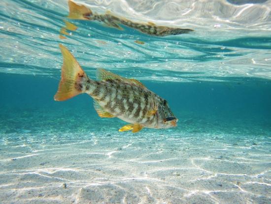 水中画像魚